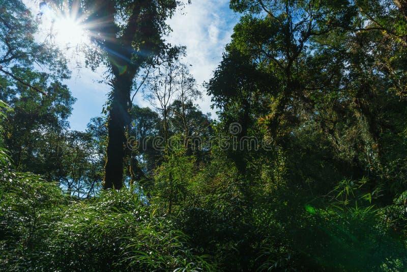 Cercado pela floresta fotografia de stock royalty free