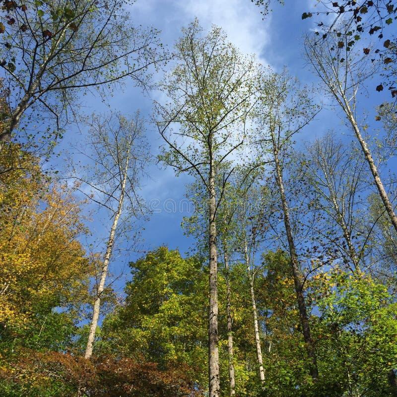 Cercando attraverso gli alberi nella caduta in anticipo fotografie stock libere da diritti