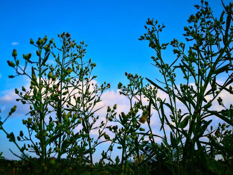 Cercando il cielo blu con il fondo della nuvola con naturale immagine stock