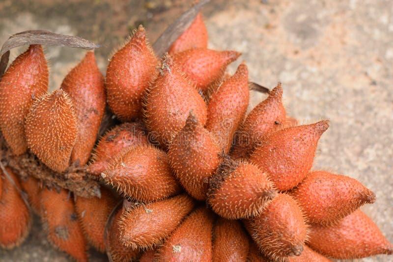 Cercano para arriba de las frutas locales del zalacca Malasia, tailandés de Salacca de la fruta del salak e indonesio imagenes de archivo