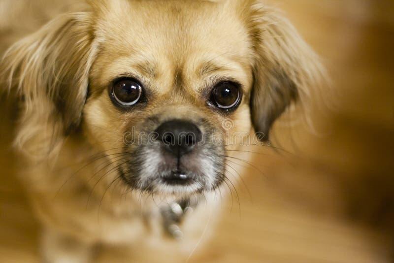Cercare del cane fotografie stock libere da diritti