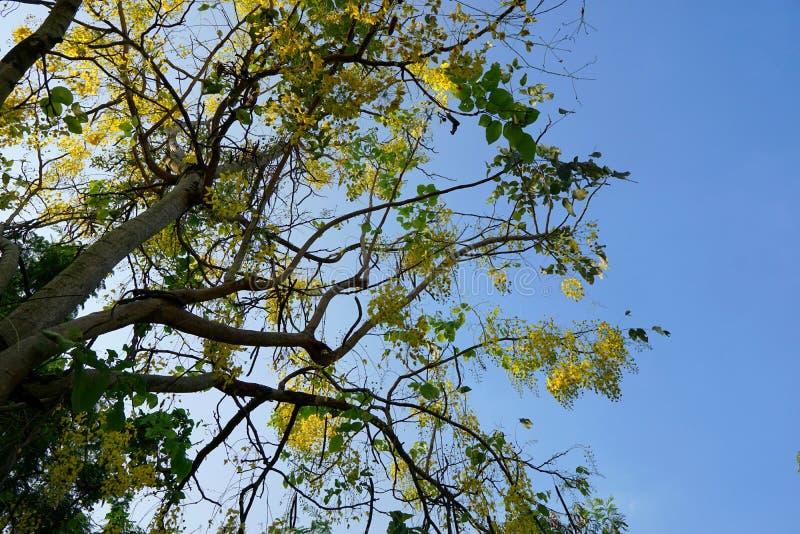 Cercare i fiori gialli sul fondo del cielo blu immagini stock libere da diritti