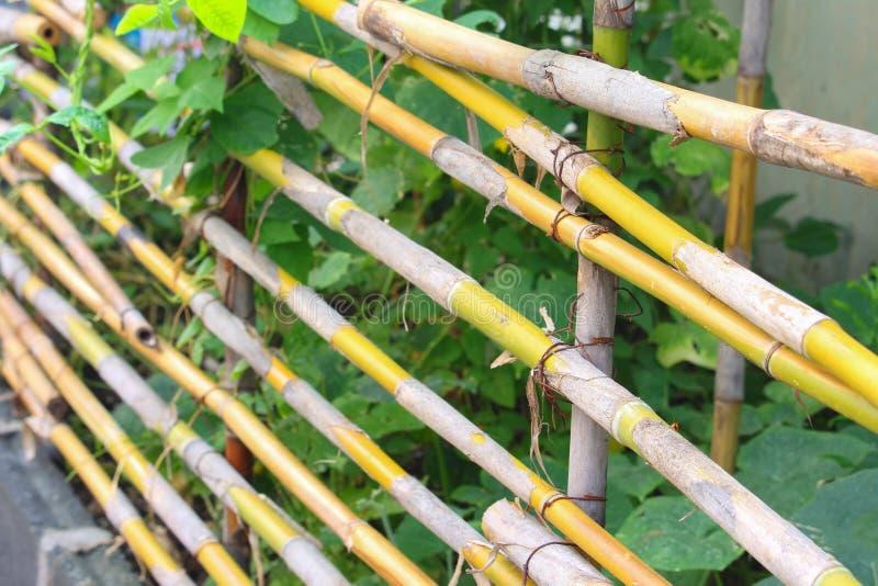 Cercas de bambu no campo agrícola do jardim imagem de stock