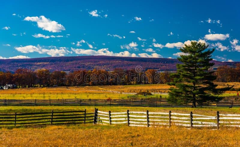 Cercas e pinheiro em um campo em Gettysburg, Pensilvânia foto de stock