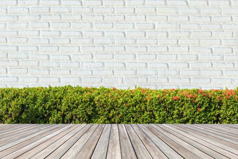 Cercas verdes dos arbustos na parede de tijolo branca fotografia de stock royalty free