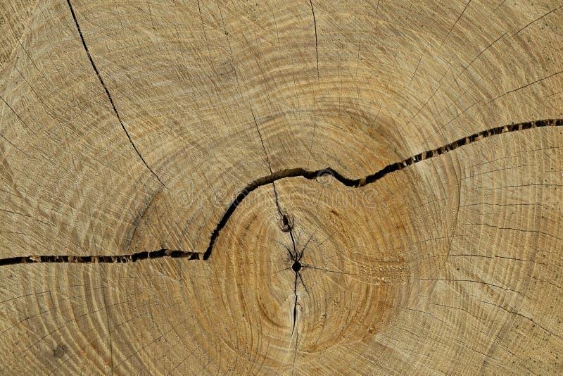 Cerchi di un albero fotografia stock libera da diritti