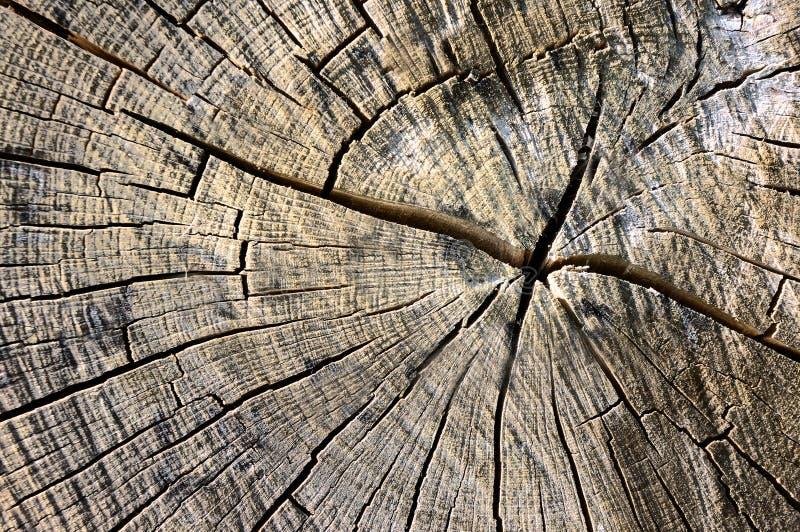 Cerchi sulla corteccia di un albero fotografia stock libera da diritti