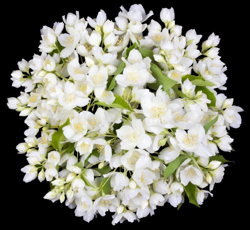 Cerchio dai fiori bianchi del gelsomino immagini stock