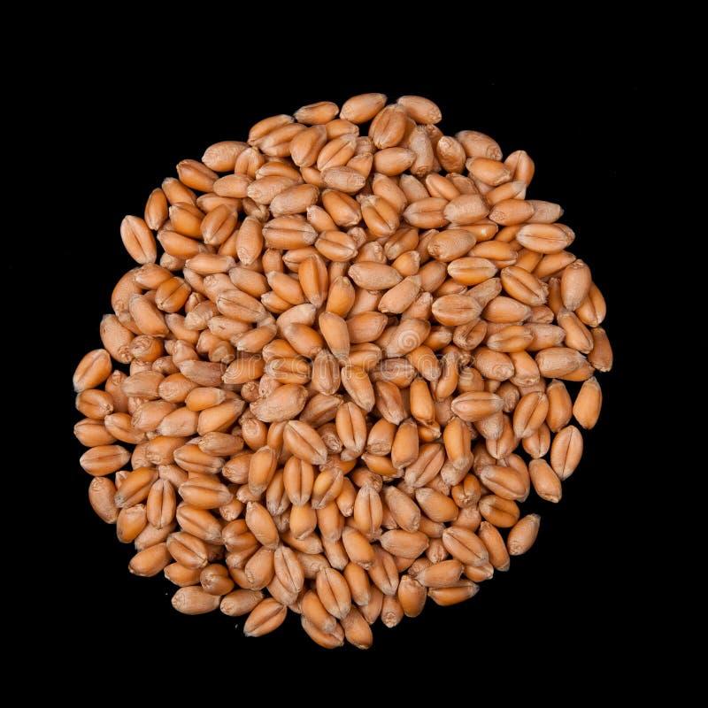 Cerchio del seme del frumento immagine stock