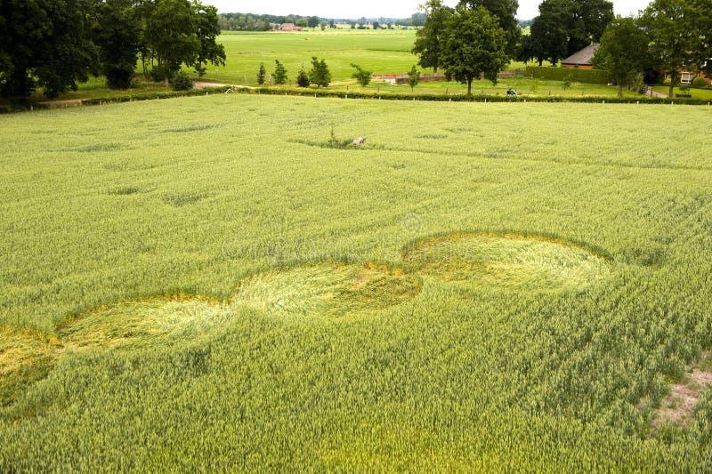 Cercle de culture dans un domaine de blé images libres de droits