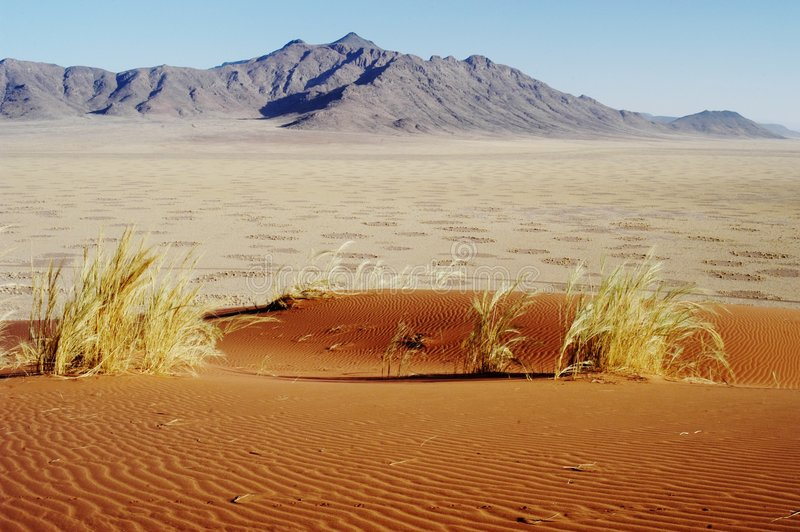 Cercles féeriques dans le désert, Namibie images libres de droits