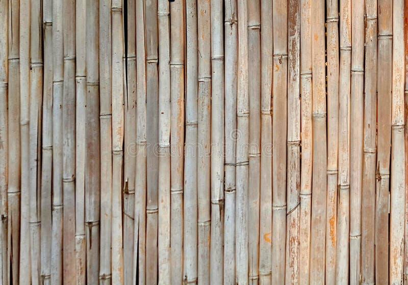 Cerco do elemento, feito dos tambores do bambu maduro imagens de stock royalty free