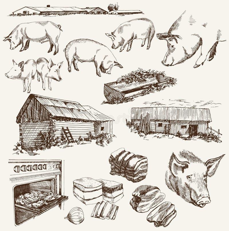 Cerdo-cría ilustración del vector