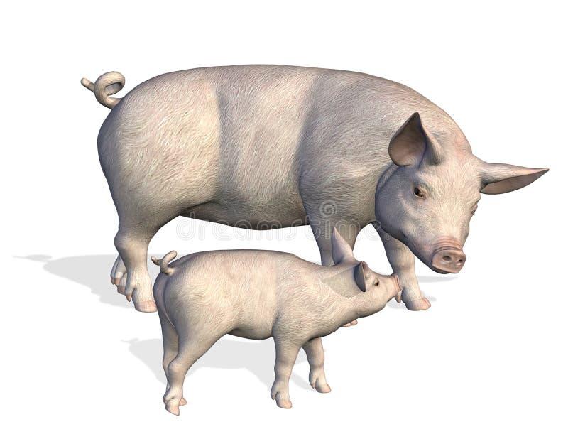 Cerdo de la madre con el cochinillo ilustración del vector