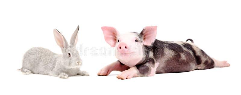 Cerdo divertido y conejo lindo imagenes de archivo