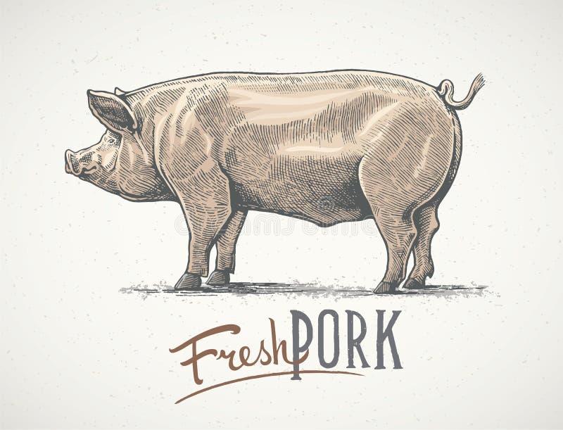 Cerdo en estilo gráfico ilustración del vector