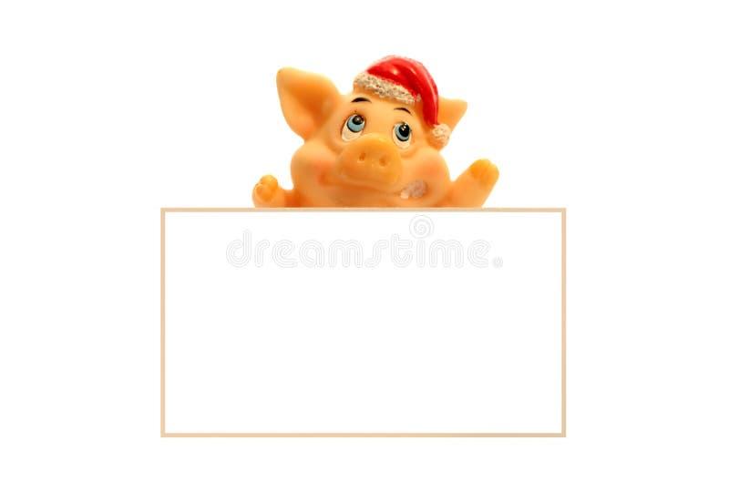 Cerdo en tarjeta fotos de archivo libres de regalías