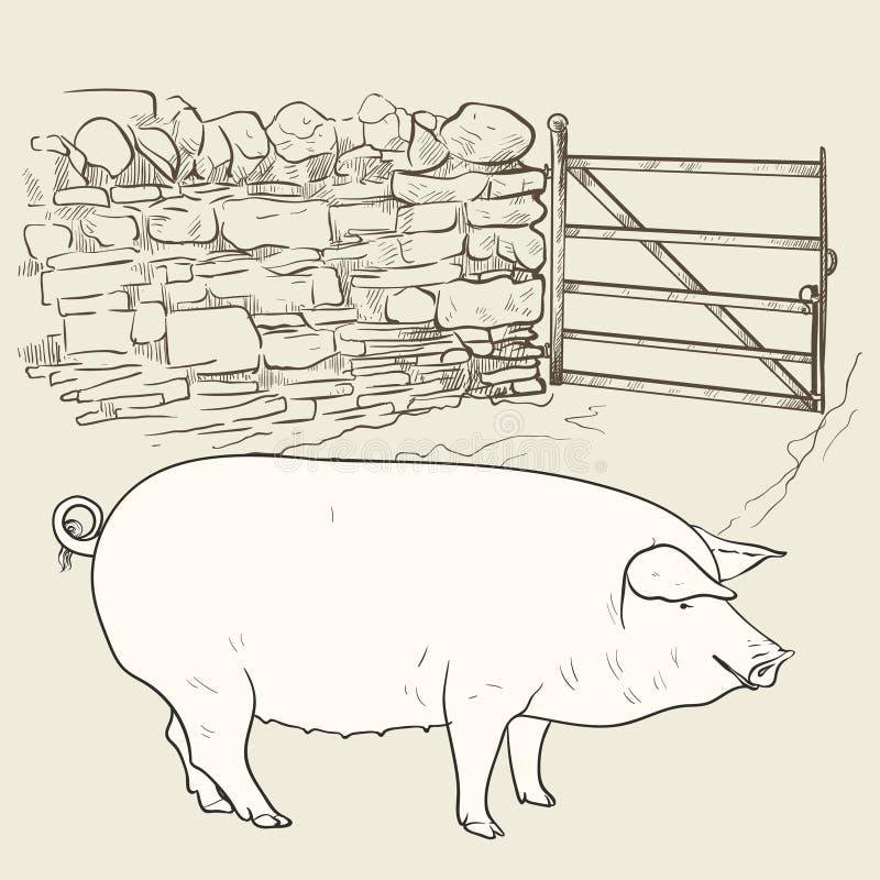 Cerdo grande en la puerta imagen de archivo libre de regalías