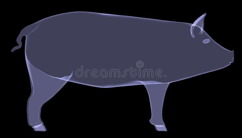 Cerdo. La radiografía rinde stock de ilustración