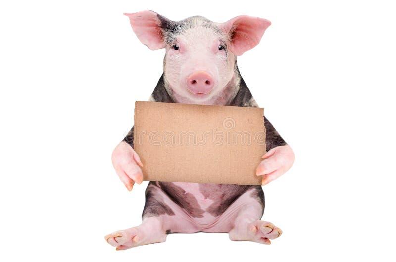Cerdo lindo con una muestra de la cartulina foto de archivo libre de regalías