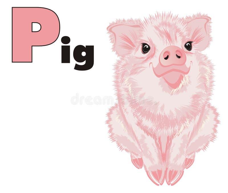Cerdo y ABC coloreado libre illustration
