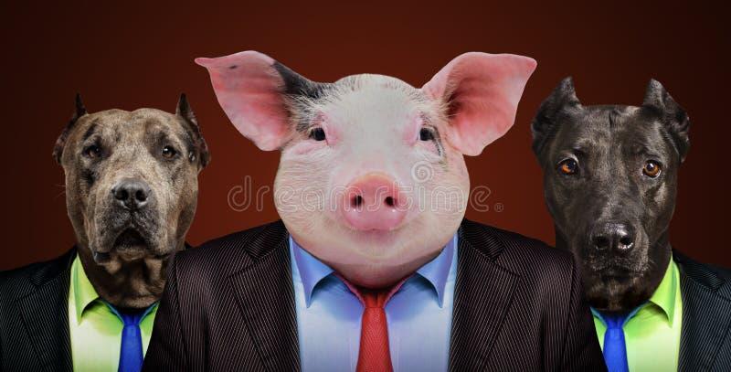 Cerdo y dos perros en trajes de negocios imagen de archivo libre de regalías