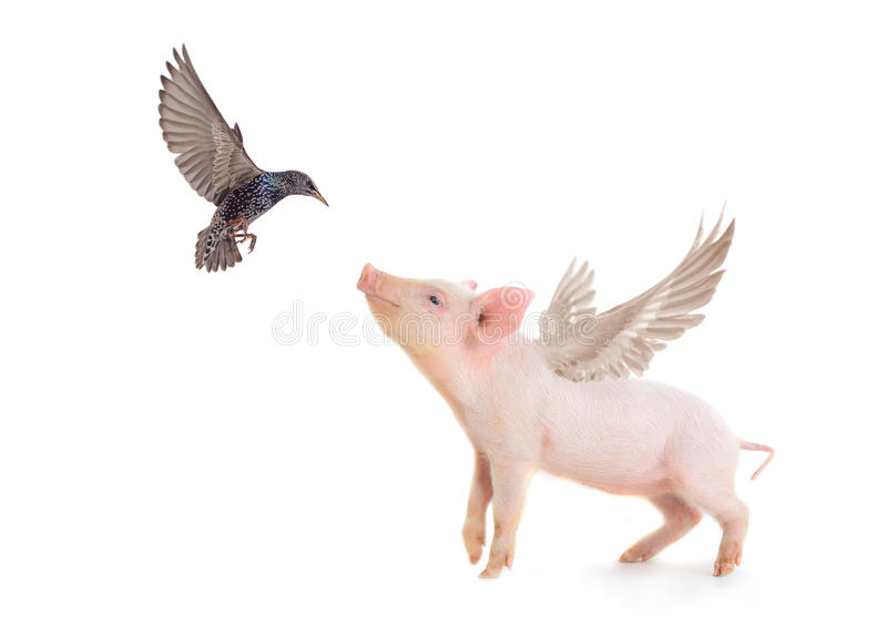Cerdo y pájaro imagen de archivo
