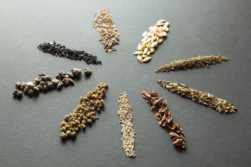 Cereais e sementes orgânicos: aneto e melão e cenouras e erva-doce com ruibarbo, alface e beterrabas, espinafre, cebolas em um  imagem de stock