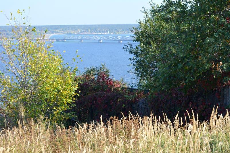 Cereais secos e árvores com folha colorida no fundo do rio O come?o do outono imagem de stock