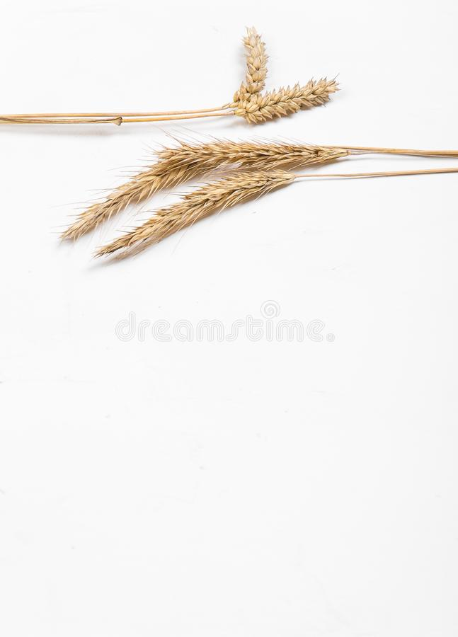 Cereal ears on a white background. Wheat and rye ears. View from above royalty free stock image
