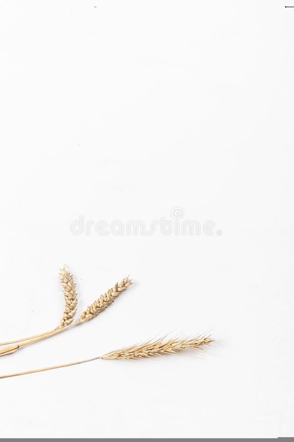 Cereal ears on a white background. Wheat and rye ears. View from above royalty free stock photos