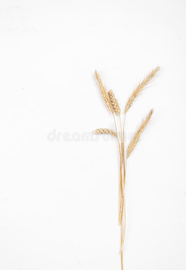 Cereal ears on a white background. Wheat and rye ears. View from above stock photos
