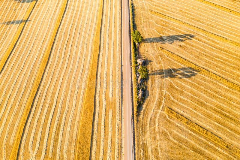 Cereal fields in Castilla y Leon Spain bird´s eye view stock photography