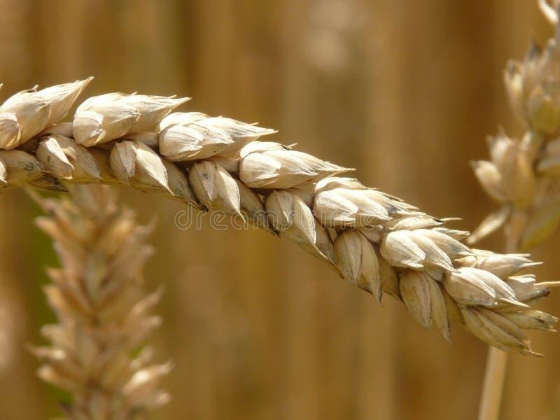 Cereal Grain Free Public Domain Cc0 Image