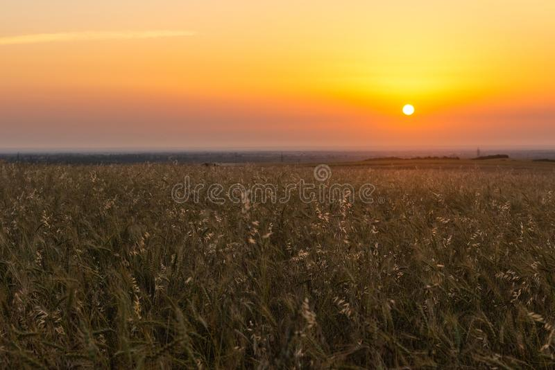Cereal wheat fields at sunrise royalty free stock photography