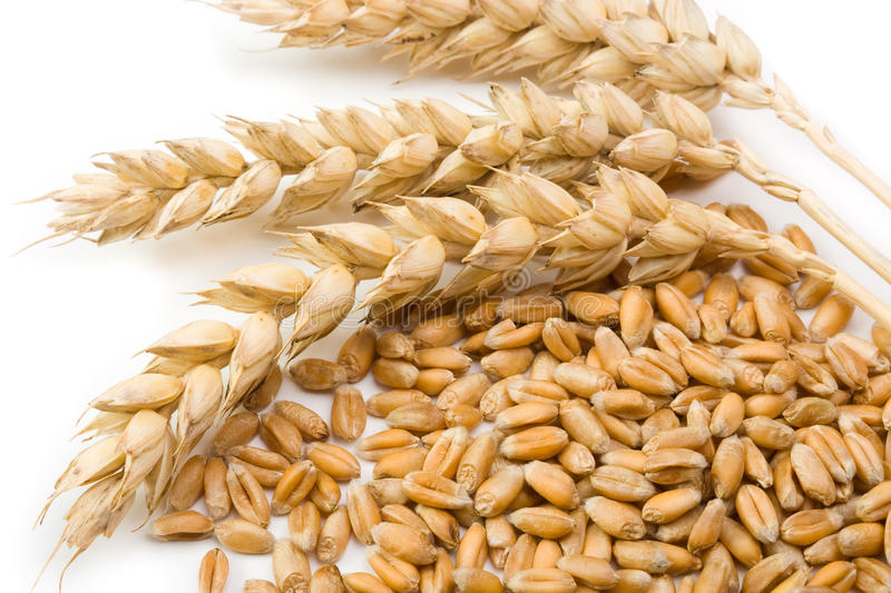 Cereal and wheat spike stock image