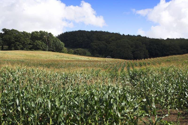 Download Cereale fotografia stock. Immagine di raccolta, sano, verdura - 212132
