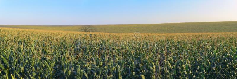 Cereale archivato con cielo blu fotografie stock libere da diritti