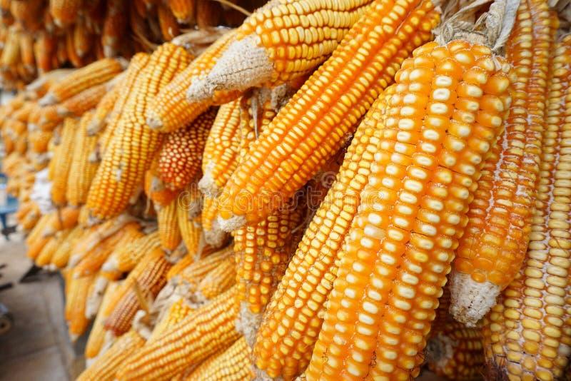 Cereale asciutto per produrre il popcorn immagini stock libere da diritti