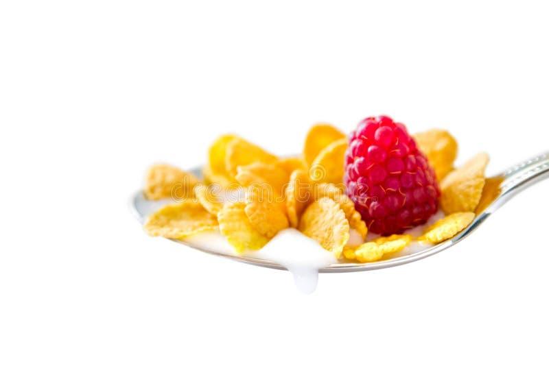 Cereale in cucchiaio immagine stock