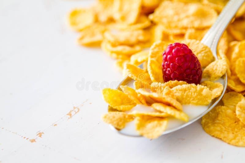Cereale in cucchiaio immagine stock libera da diritti