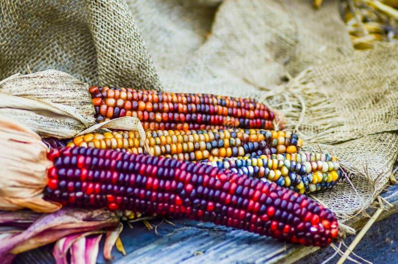 Cereale decorativo indiano sull'esposizione dell'azienda agricola fotografia stock