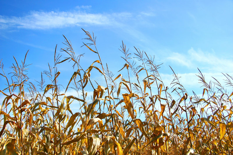 Download Cereale di autunno fotografia stock. Immagine di crescere - 3134608