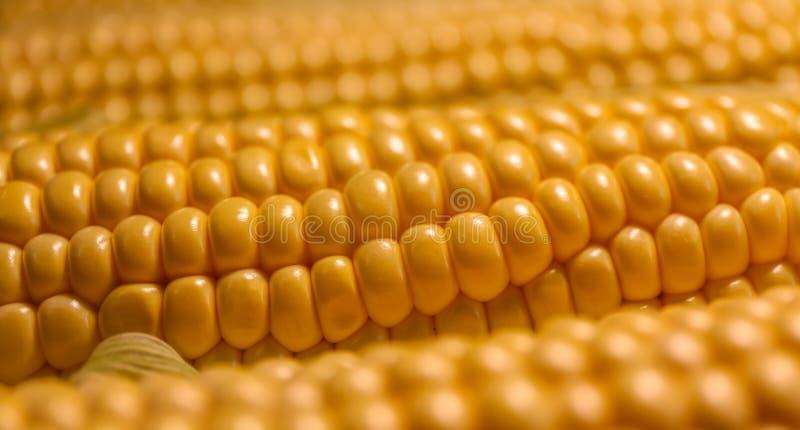 Cereale dorato nella spirale dell'ascensione immagine stock libera da diritti