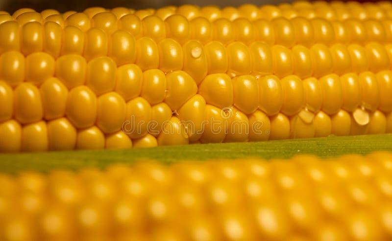 Cereale dorato nella spirale dell'ascensione fotografie stock