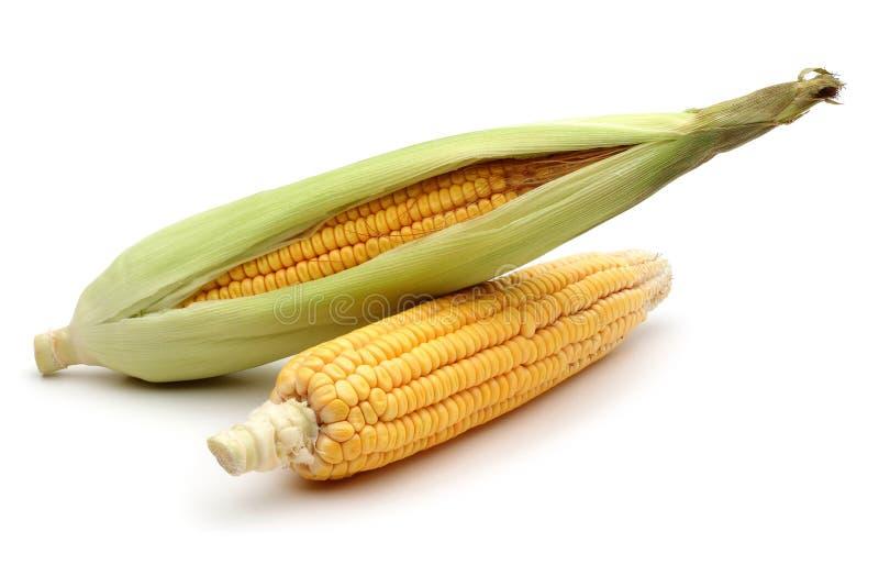 Cereale fresco isolato su un bianco fotografie stock libere da diritti