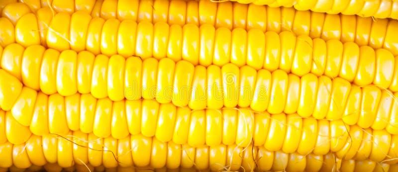 Cereale giallo del primo piano immagine stock