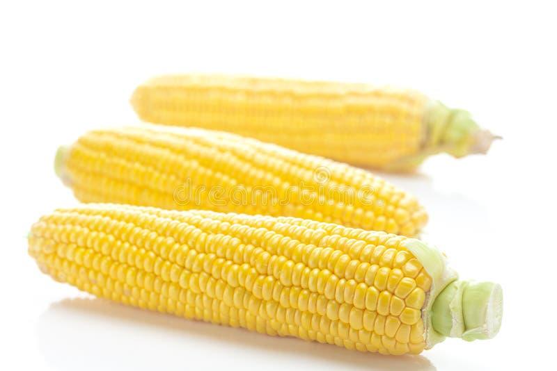 Cereale giallo maturo fotografia stock