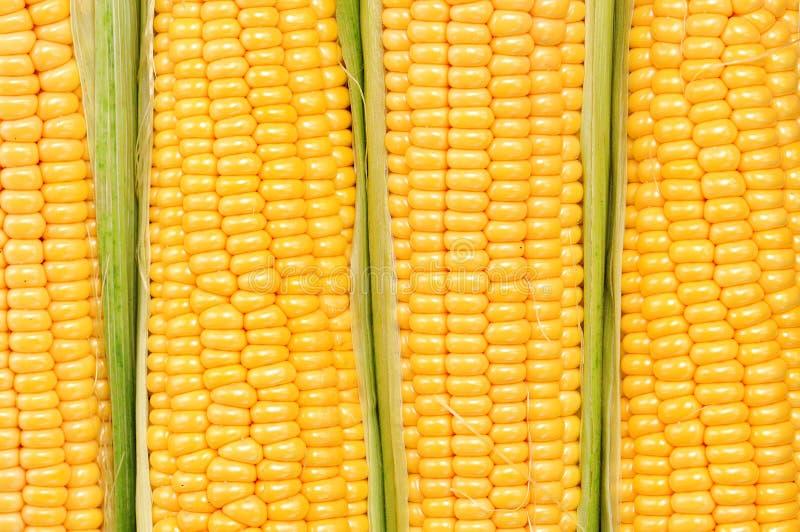 Cereale giallo organico Fondo Alimento squisito fotografia stock libera da diritti