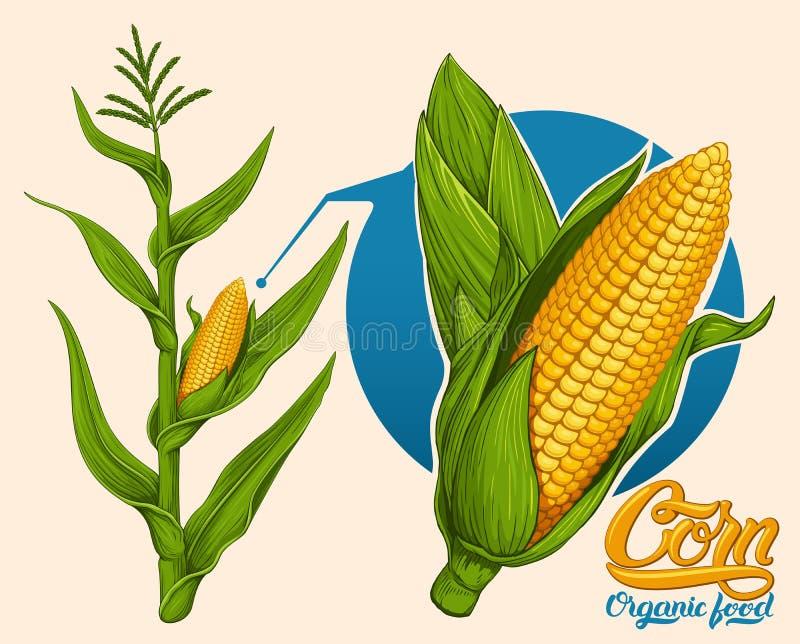Cereale maturo illustrazione di stock